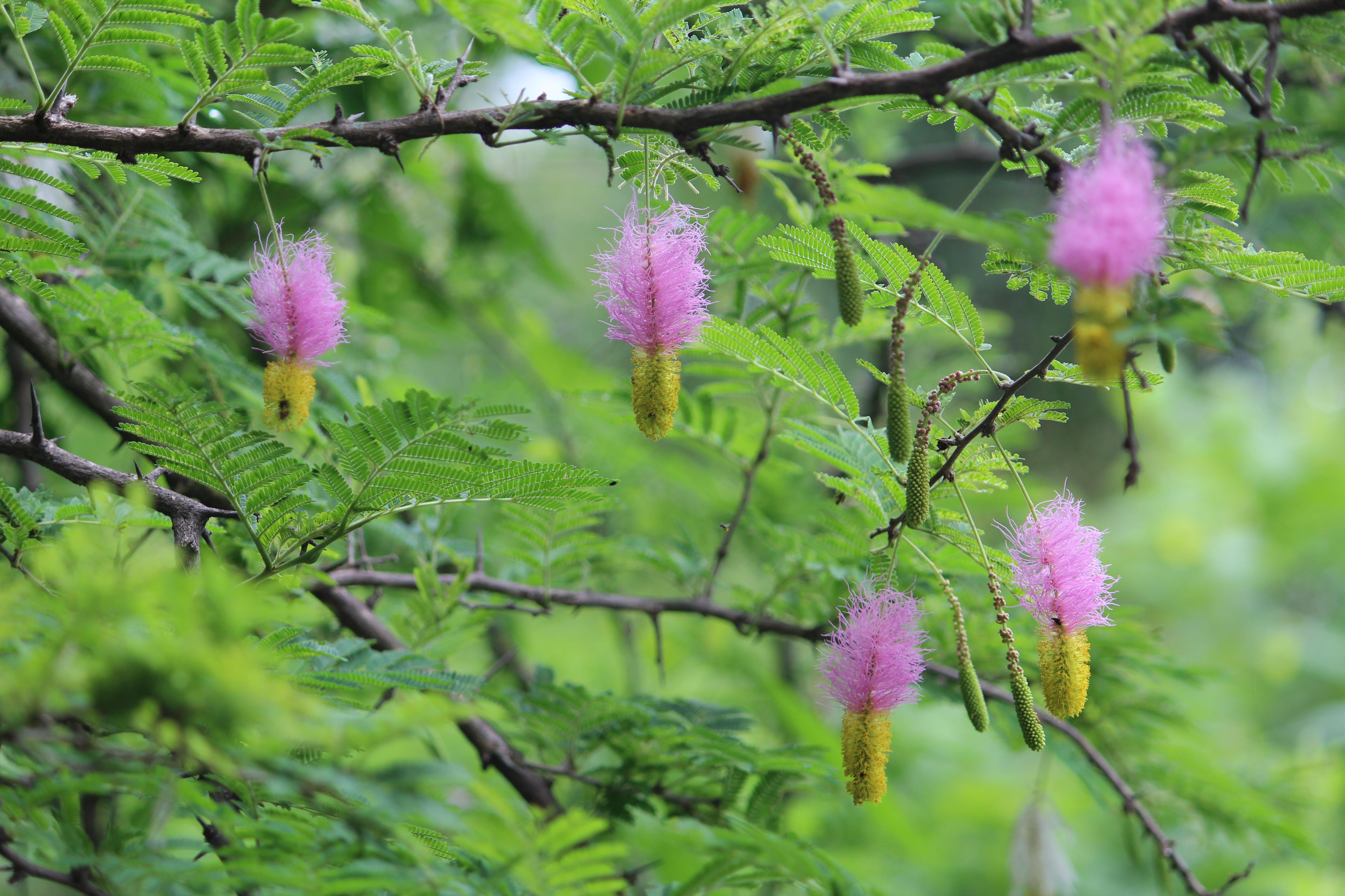 plantas endometriosis instituto de acupuntura